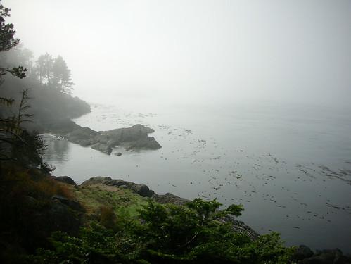37-Shark Reef Fog