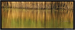 Reflections ... (G.Hotz Photography (busy as a bee =)) Tags: austria sterreich sony bregenz alpha 2007 vorarlberg naturesfinest supershot impressedbeauty diamondclassphotographer flickrdiamond theperfectphotographer ondarena