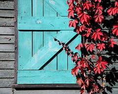 Fall Colors (HamWithCam) Tags: atlanta red fall colorful atl hamwithcam hwc 5d 24105l bwcpl