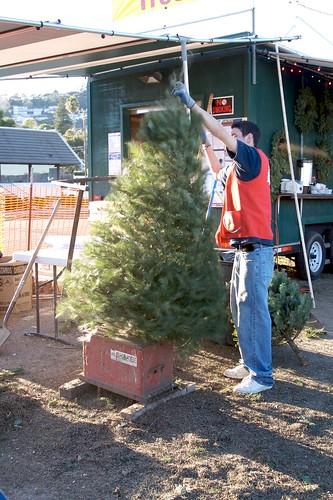 De-bugging the tree