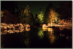 VanDusen Botanical Garden (janusz l) Tags: christmas desktop wallpaper love garden geotagged botanical peace background joy festivaloflights vandusen janusz leszczynski lovecamedownonchristmas geo:lat=49240284 geo:lon=123131601