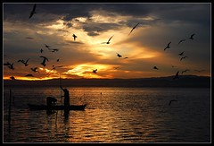 (tcc20012) Tags: sunset espaa naturaleza sun luz valencia contraluz spain nikon contest paisaje cielo nubes anochecer albufera fpc eow d80 35faves nikond80 diamondclassphotographer megashot theunforgettablepictures tcc20012 imagicland obramaestra