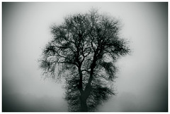 (Ana Cuba) Tags: winter en tree el un rbol invierno niebla