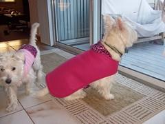 Penny & Keli's New Sweaters