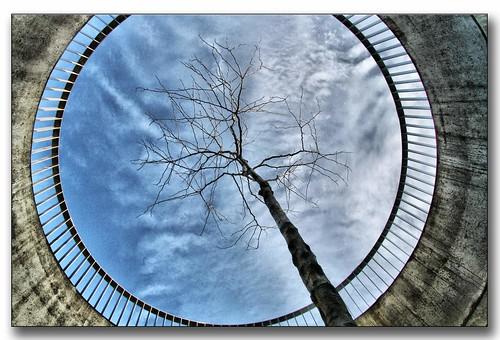 Prisoner Tree