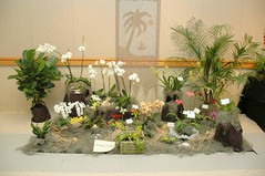 Orchidview Orchids Display