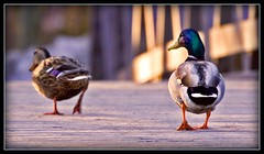 spring in your step (unonymous) Tags: nature birds animals outdoors lightroom theperfectphotographer {places}