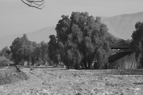 Hemet Stock Farm