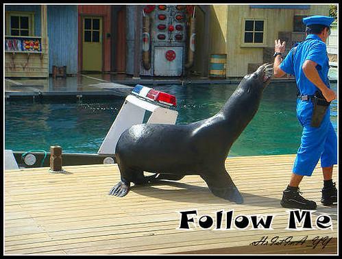 Sea World: Fish Detectives Sea Lion Show