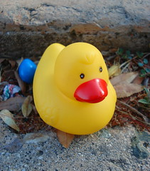 Patito Y El Huevito Azul (Srch) Tags: yellow azul amarillo ducky pato duckie patito yellowduck yellowduckie yellowducky colourartaward patoamarillo