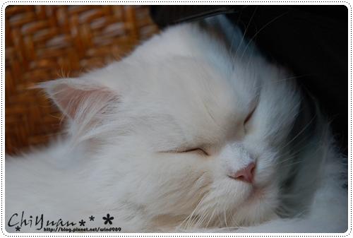 【貓季】一起幸福之眠