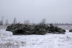 Dumped after Christmas (Martijn A) Tags: christmas trees kerstbomen kerst weihnachtsbäume tannenbaum weihnachten les arbres de noël sneeuw snow schnee neige 35mm canon d550 dslr lens wwwgevoeligeplatennl