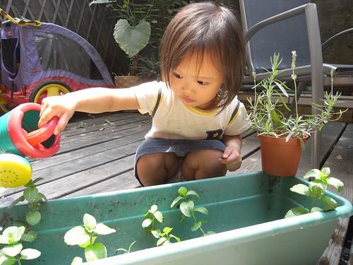 你拍攝的 3小園丁澆花。