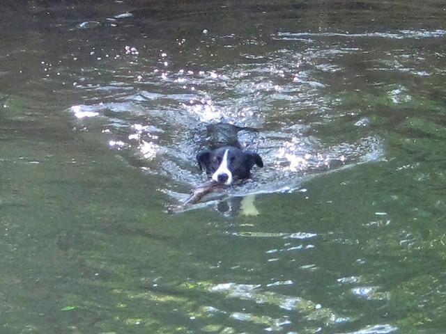 swimming V
