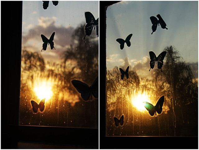 project 52-20-sunrise butterflies diptych
