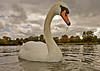 Swan with attitude (graspnext) Tags: park london big swan hyde mute momma bigmomma superhearts photofaceoffwinner pfogold