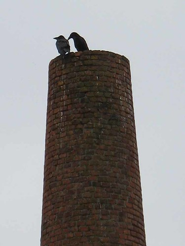 Birds on chimney