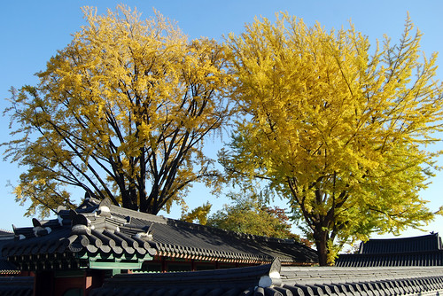 Fall Foliage, Changdeokgung Palace