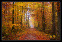 Wonderful Autumn (Andrea&Mike@Flickr) Tags: wood autumn fall bravo forrest herbst wald naturesfinest blueribbonwinner outstandingshots 35faves mywinners abigfave colorphotoaward diamondclassphotographer excellentphotographerawards thegoldenmermaid