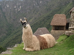 Machu Picchu, Peru (e771ca) Tags: peruvianimages