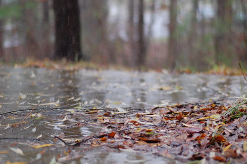 Back porch rain