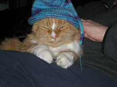 fergus trying on the baby hat