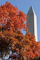 Washington Monument in Fall (BACHarbin) Tags: autumn trees red orange usa fall monument leaves season washingtondc dc washington districtofcolumbia memorial fallcolors photoblog obelisk nationalmall washingtonmonument georgewashington memorials submittedtophotoshelter nationalmallandmemorialparks