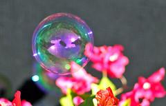 Bubble (apflorida) Tags: bokeh bubbles bougainvillea bubblevision