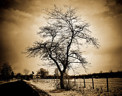 Antiqued Sepia Tree (Jesse James Photography) Tags: tree photoshop country deserted cotcmostinteresting adobelightroom tamron1750 nikond80