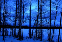 Moonlit night (dr.zeppo) Tags: blue winter moon snow suomi finland koivu moonlight birch d200 lumi talvi kuu saimaa kuutamo tokinaatx12244 luonteri anawesomeshot