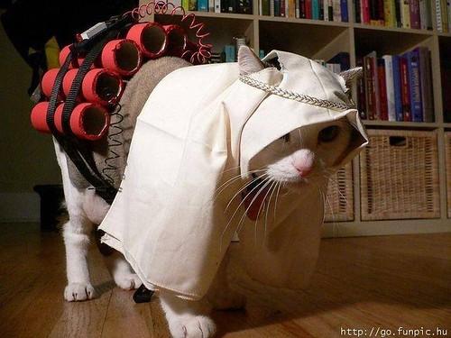 Cómo reconocer un gato persa