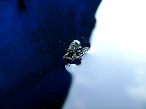 mouche sur glace