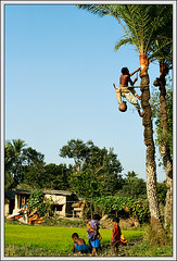 Bangladesh has it. [..Chuadanga, Bangladesh..] (Catch the dream) Tags: blue winter sky people nature rural children landscape village play juice bongo vista remote date bengal bangladesh bangla villagers bengali bangladeshi bangali datetree catchthedream gettyimagesbangladeshq2
