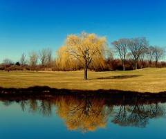 """My Golden Tree"" (my4otos) Tags: park trees lake nature reflections golden interestingness longisland hempstead nina weepingwillow blueribbonwinner flickrsbest treesubject onlythebestare thatsbostin theperfectphotographer"