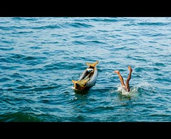 half inside (thefotobaba) Tags: life sea india boat jump fisherman village dive mussels kovalam