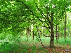 Forest / Wald / Bosque (Alberto Marn) Tags: primavera del forest photoshop germany deutschland spring abril may bosque finepix april alemania nrw fujifilm mayo wald rhein soe nordrheinwestfalen norte neuss westfalia e500 rnw renania frhlingswald inderbauernhof