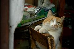 2008-0510-cat04