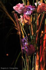 Jaqueline e Delson107 (rogeriojrfotografias) Tags: abril decora decoração gardenparty decorao jaquelineedelson