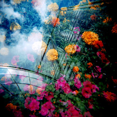 Flowers In The Sky With... (bheuer) Tags: pink flowers blue sky green yellow clouds square toy holga exposure doubleexposure searstower double lookingup 120film plastic marigold cotcmostinteresting aplusphoto