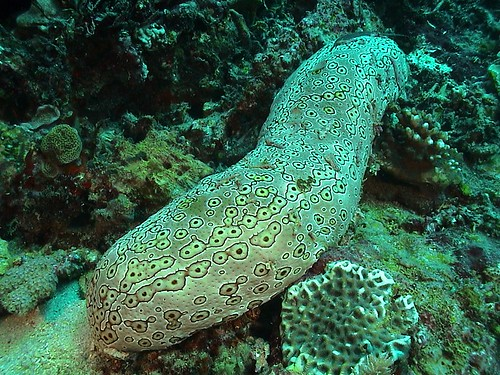 Sea Cucumber USB Nervous System