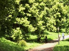 ortobotanico 196 (blum1) Tags: alberi fiori piante ortobotanico