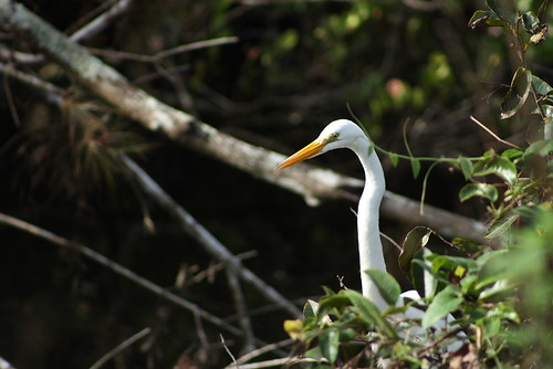 heron sweetwater strand