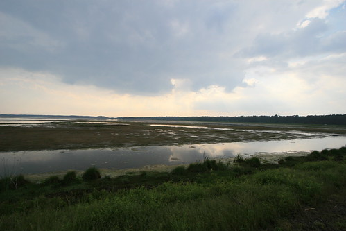 Chincoteague View
