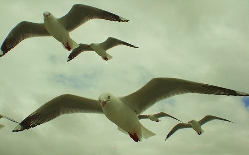 71 Seagulls