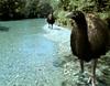 Monsters We Met - Moas in the river