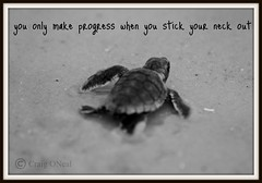 Baby Sea Turtle Poster (minds-eye) Tags: ocean sea bw beach nature poster waves turtle eggs motivation endangered seaturtle picnik hatchlings