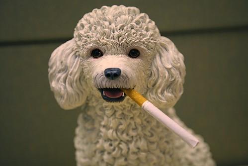 Smoking Poodle