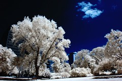 summertime blues (mugley) Tags: infrared ir falsecolour falsecolor park gardens trees parkscape cloud sky blue buildings skyscrapers city urban woodeffect flagstaffgardens melbourne victoria australia nikon d70 1855mmf3556gii cokin p007 filter rbchannelswap yellowdesaturated