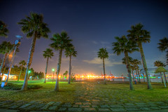 night park palm tree (xjrshimada) Tags: japan tokyo hdr hdri