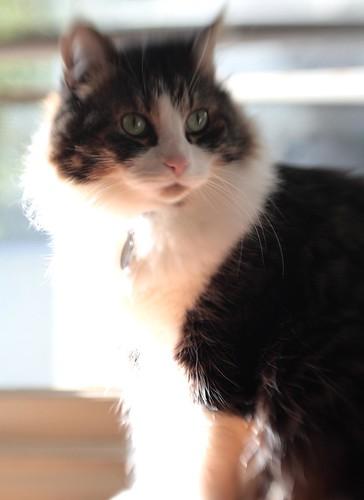 Lens Baby Study #5: Sunny Kitty